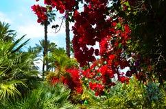 Garten am Sommer Stockfoto