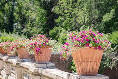 Garten am Sommer Stockbilder