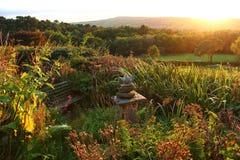 Garten-Sonnenuntergang Stockbilder