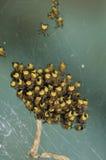 Garten Spiderlings Stockfoto