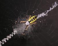 Garten-Spinne Lizenzfreie Stockbilder