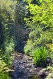 Garten-Strom Lizenzfreies Stockbild