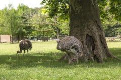 Garten tete d oder ` Parc de la Tete d oder in Lyon, Frankreich Garten genannt durch Goldkopf für tresor Park des goldenen Kopfes lizenzfreie stockfotografie
