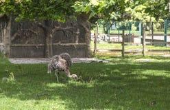 Garten tete d oder ` Parc de la Tete d oder in Lyon, Frankreich Garten genannt durch Goldkopf für tresor Park des goldenen Kopfes lizenzfreie stockbilder