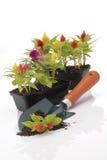 Garten Trowel Lizenzfreies Stockfoto