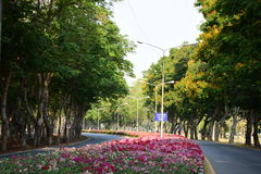 Garten u. Blume Stockbild