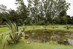 Garten und Natur in Nuwara Eliya Sri Lanka Lizenzfreies Stockbild
