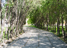 Garten Vagharshapat Eriwan Armenien Ejmiatsin Stockfotos