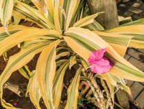 Garten verlässt mit den rosa Blumenblumenblättern lizenzfreies stockbild