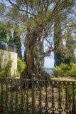 Garten von Achilleion, Korfu, Griechenland Lizenzfreie Stockfotos