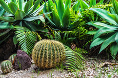 Garten von Kakteen Stockbild