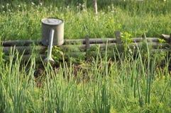 Garten-wässernpetersilie-Lauch-Bauernhof Lizenzfreie Stockbilder