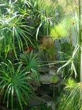 Garten-Wasserfall Lizenzfreie Stockfotos