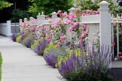 Garten-Zaun mit Rosen Stockbild