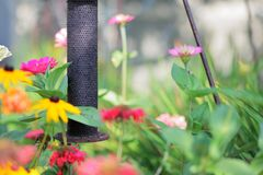 Garten-Zufuhr Stockfotografie