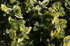Gartenabschluß herauf Strauchfoto stockfoto