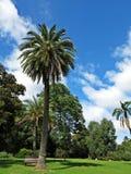 Gartenansicht mit hohen Bäumen und blauem Himmel Stockfotografie