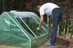 Gartenarbeit. Stockbilder