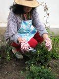 Gartenarbeit Stockfoto