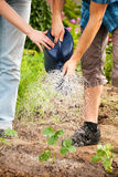 Gartenarbeit - Bewässerung der Anlagen Stockfoto