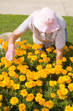 Gartenarbeit der alten Frauen Stockbilder