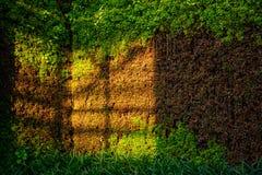 Gartenarbeit des grünen Hauses Stockfotografie