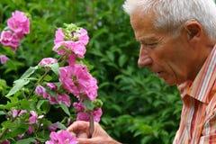 Gartenarbeit des älteren Mannes Stockbilder
