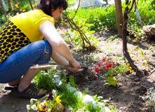 Gartenarbeit - eine Frau, die Blumen kultiviert Lizenzfreies Stockbild