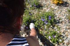 Gartenarbeit - eine Frau, die ihre Blumen im Garten kultiviert lizenzfreie stockfotos