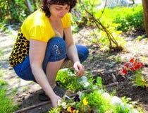 Gartenarbeit - fällige Frau, die Blumen pflanzt Stockfotos