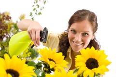 Gartenarbeit - Frau, die Wasser auf Sonnenblume spritzt Stockbilder