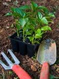 Gartenarbeit-Hilfsmittel Lizenzfreie Stockbilder