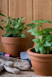 Gartenarbeit - Kräuter in den Potenziometern Stockbilder