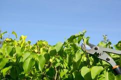 Gartenarbeit mit Klipper stockfoto