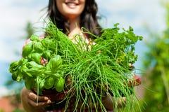Gartenarbeit am Sommer - Frau mit Kräutern Lizenzfreie Stockfotografie