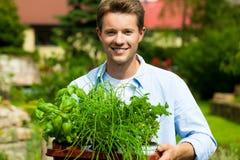 Gartenarbeit am Sommer - Mann mit Kräutern Stockbild