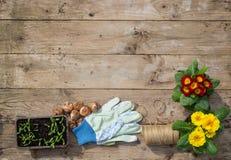Gartenarbeitanlagen, Sämlinge, Kormus und Werkzeuge Lizenzfreies Stockfoto