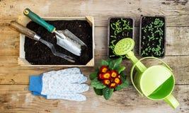Gartenarbeitanlagen und Sämlinge und Werkzeuge Lizenzfreies Stockfoto