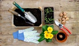 Gartenarbeitanlagen und Sämlinge und Werkzeuge Lizenzfreie Stockfotografie