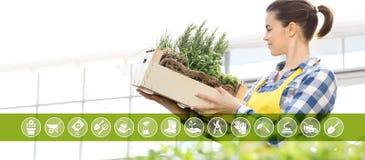 Gartenarbeitausrüstungs-E-Commerce-Ikonen, lächelnde Frau mit Holzkiste voll Gewürzkräutern auf weißem Hintergrund, Frühlingsgart lizenzfreie abbildung
