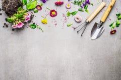 Gartenarbeitgrenze mit verschiedenen Blumen Anlage und Gartenwerkzeugen auf grauem Steinhintergrund, Draufsicht Stockfotografie