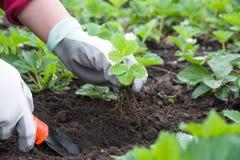 Gartenarbeithilfsmittel neu, Stocktellersegment Stockfoto