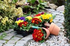 Gartenarbeitjahreszeit Stockbild