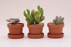 Gartenarbeitkaktus und Succulents Lizenzfreie Stockfotografie