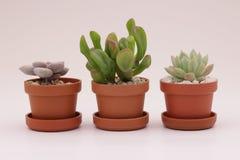 Gartenarbeitkaktus und Succulents Stockfotografie