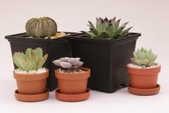 Gartenarbeitkaktus und Succulents Stockfotos