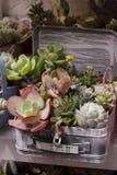 Gartenarbeitkaktus und Succulents Lizenzfreie Stockfotos