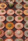 Gartenarbeitkaktus und Succulents Lizenzfreies Stockbild