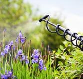 Gartenarbeitkonzept Stockfotografie