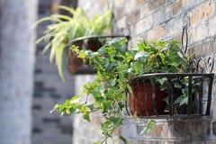 Gartenarbeittopfpflanze des Behälters Stockbilder